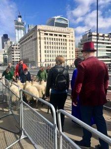 Tyler Carey marching the flock of sheep across London Bridge